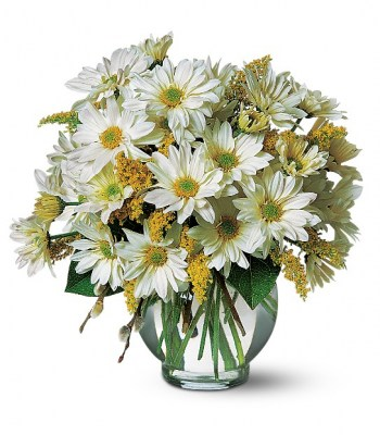 daisy-bowl-flowers